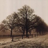 Row of Trees Fine-Art Print