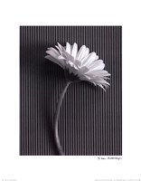 Fresh Cut Gerbera Daisy III Fine-Art Print