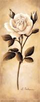 White Roses II Fine-Art Print