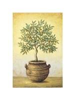 Green Olive Tree Fine-Art Print