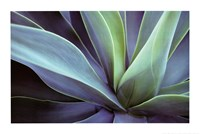 Agave Cactus Wall Poster