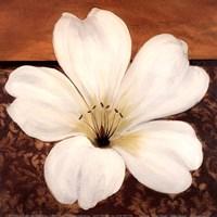 Azalea Blossom Fine-Art Print