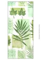Leaf Impressions VI Fine-Art Print