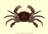 Antique Crab II Fine-Art Print