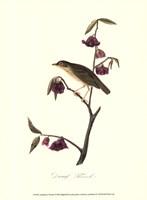 Audubon's Thrush Fine-Art Print