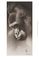 Silver Back, the Gorilla Fine-Art Print