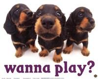 Wanna Play? Fine-Art Print
