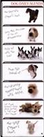 Dog Agenda Fine-Art Print