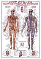 Circulatory System Fine-Art Print
