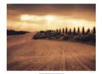Cypress Study - Tuscany Fine-Art Print