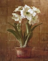 White Amaryllis on Bronze Fine-Art Print