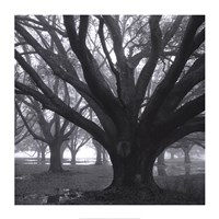 Oak Grove, Winter Fine-Art Print
