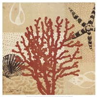Coral Impressions III Framed Print