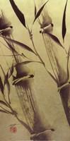 Bamboo's Peace Fine-Art Print