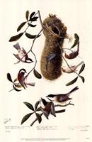 Black-Capped Chickadee Fine-Art Print