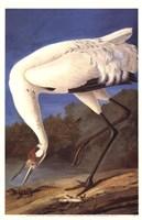 Whooping Crane Fine-Art Print