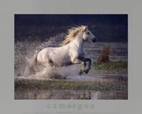 Aquatic Gallop Fine-Art Print
