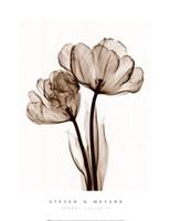 Parrot Tulips II (Sm) Fine-Art Print