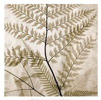 Ferns II Fine-Art Print