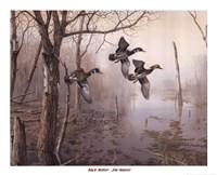 Backwater Fine-Art Print