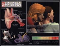 Hearing Fine-Art Print