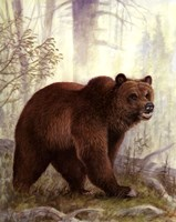 Grizzly Mama Fine-Art Print