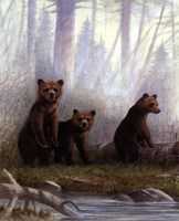 Grizzly Cubs Fine-Art Print