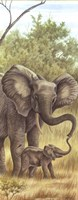 Mama Elephant With Baby Fine-Art Print