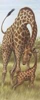 Mama Giraffe With Baby Fine-Art Print