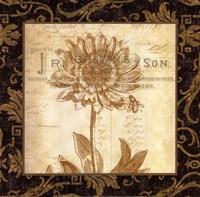 Anemone Fine-Art Print