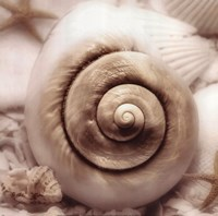 Iridescent Seashell I Fine-Art Print