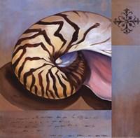 Sanibel Nautilus Fine-Art Print