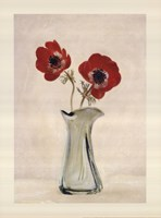Two Anemones - Special Fine-Art Print