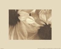 Daisies I Fine-Art Print
