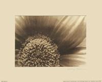 Gerberas II Fine-Art Print