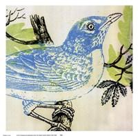 Bluebird Fine-Art Print