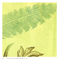 Feather Leaf Fine-Art Print