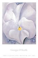 White Pansy Fine-Art Print