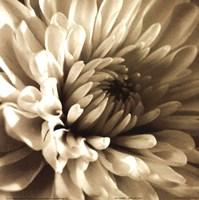 Sepia Bloom I Fine-Art Print