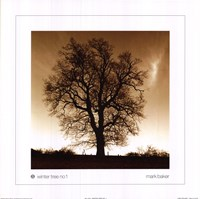 Winter Tree No. 1 Fine-Art Print