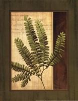 Fern Grotto II Fine-Art Print