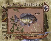 Blue-Gilled Sunfish Fine-Art Print