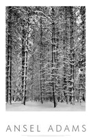 Pine Forest in Snow (embossed) Fine-Art Print