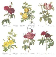 Roses (Set of Six) Fine-Art Print