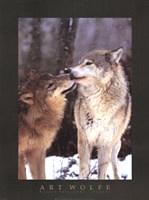 Boreal Interlude, Canada Fine-Art Print