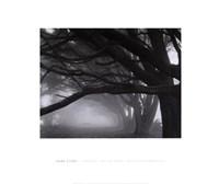 Cypresses, Skyline Drive, South San Francisco, 1996 Fine-Art Print