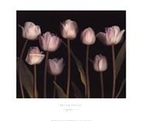 Spring Chorus Fine-Art Print