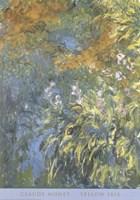 Yellow Iris Fine-Art Print