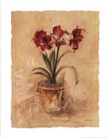 Secret Amaryllis II Fine-Art Print