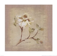 Dogwood Square Fine-Art Print